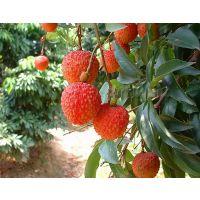 供应合肥荔枝保鲜冷库保养,质量及维修费用