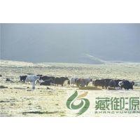 青海牦牛肉厂商,青海牦牛肉,藏御源牦牛肉(在线咨询)