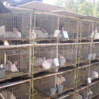 陕西省西安兔子笼子批发价格 养殖兔子专用笼子规格报价
