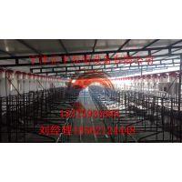 养猪自动料线安装一栋需要多少钱、塞盘料线、绞龙上料机、料槽