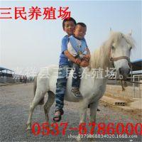 宠物马养殖 宠物马品种 宠物马价格 三民牧业宠物马促销