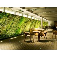植物墙,墙上的花园