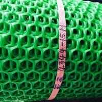 供应现货 养鸭塑料网 鸡厂专用网 绿色塑料网 养殖