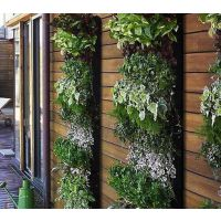 供应植物墙|绿化墙|垂直绿化等绿化项目