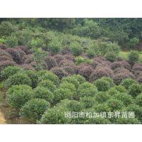 湖南苗木公司优价提供园林绿化苗木 绿化树木 绿化草皮及草坪