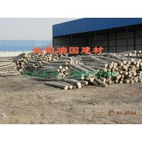 赤峰杨木加工市场【沈阳瑞国木业】