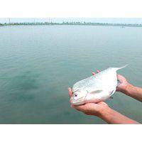 鳊鱼循环水养殖中的水体控制