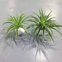 仿真花草植物 绿边草吊兰草塑料花绿叶子假花绢花植物墙园艺用品