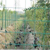 涂塑荷兰网 护栏网 绿色养殖荷兰网 乳山万通1.8米*30米咨询热线13561889297