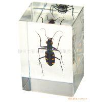 加工定制 昆虫琥珀书镇/纸镇 广告促销活动赠送礼品 高档琥珀饰品