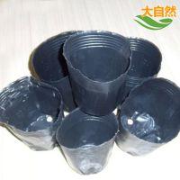厂家整件批发优质黑色塑料营养钵育苗盆育秧盆营养杯育苗袋厂