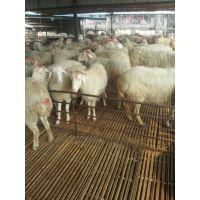 湖羊规模养殖效益提高方法