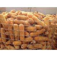 山东圈玉米电焊网价格,圈玉米铁丝网厂家,圈玉米网网孔规格,圈玉米网批发零售价格