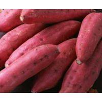 山东紫薯价格现在是多少