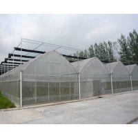 农用遮阳网|绿色聚乙烯遮阳网【金耀捷】批发价