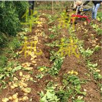 自动土豆收获机 花生收获机 果秧自动摆齐高效