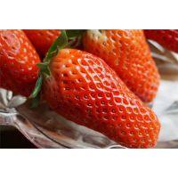 仁源农业科技(图)|甜宝草莓苗直销|杭州市甜宝草莓苗