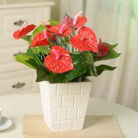 仿真花植物盆栽 小红掌塑料假花 装饰绢花批发 客厅装饰品