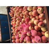 山东苹果 苹果价格 苹果批发 红富士苹果 嘎啦苹果 美八苹果 红将军苹果