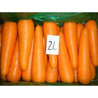 批发供应2015年山东产出口S、M、L、2L、3L级保鲜胡萝卜