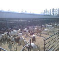 哪里有养殖波尔山羊的基地