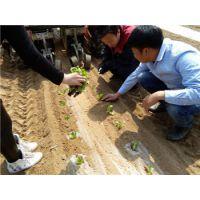 田耐尔2016年新一代2行菜花移栽机,质量保证,服务到位