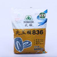 新型高产优质玉米种子 先玉糯836 长期批发早熟玉米种 高发芽率