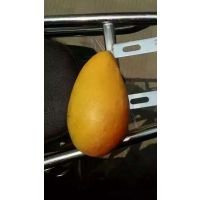 泉州芒果 芒果苗 龙眼 菠萝蜜 农户报价供应