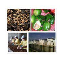 深圳槟榔烘干机|福瑞斯永淦|槟榔烘干机图片
