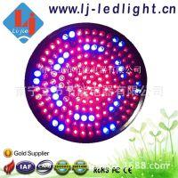 LED 9W 灯杯 PAR38 / 168PCS  植物育苗补光灯室内多肉植物生长灯