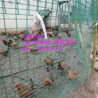 养殖荷兰网 绿色养殖铁丝网 荷兰网多少钱一米