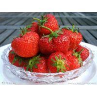 红颜草莓苗批发供应 坐果能力强 果肉较细,甜酸适口,香气浓郁,品质优