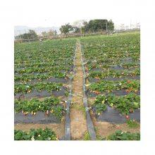 北京大棚草莓滴灌带 滴灌管 滴灌设备生产厂家