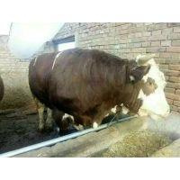 牛预混料好厂家大品牌
