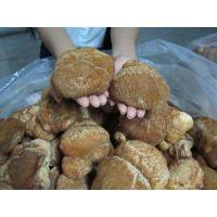 东北猴头菇厂家批发干品鲜品质量保证,全国发货