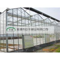 供应贵州文洛式温室大棚