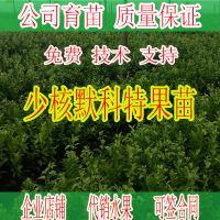 桂林哪里有默科特苗批发