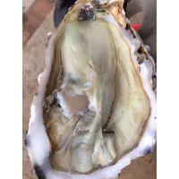 乳山生蚝几月份好吃 牡蛎批发厂家