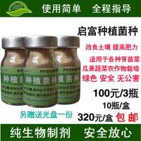 栽培豆芽菜如何使用启富种植专用em菌液