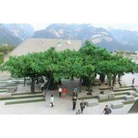 仿真榕树布景 商场仿真树布置 广州仿真榕树厂家 假树定做