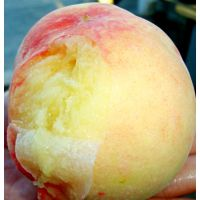 7月现摘发货 桃李山园正宗蒙阴水蜜桃礼盒装桃子单个5两桃子批发