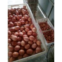 厂家供应蛋壳颜色改良剂-壳红素,使蛋壳红亮