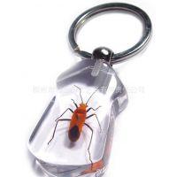 加工定制 直销特龙品牌饰品 透明水晶昆虫标本琥珀工艺钥匙扣