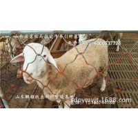 优质小尾寒羊 小尾寒羊羊羔价格 羊羔养殖效益 小尾寒羊养殖技术