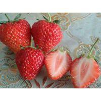 蜀山区红颜草莓苗,志达园艺场(图),红颜草莓苗口感好