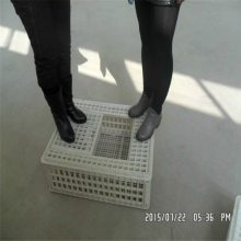 塑料鸡笼 运输鸭笼 山东鸡鸭鹅运输筐