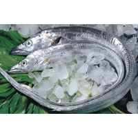 青岛进口带鱼清关代理公司、冷冻水产进口报关行