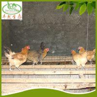 直销供应 生态农业土鸡养殖 本地优质土鸡