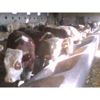 山西肉牛场