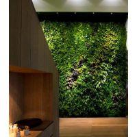 北京绿魂谷01屏风壁画 北京绿魂谷办公室绿植家庭装修除甲醛